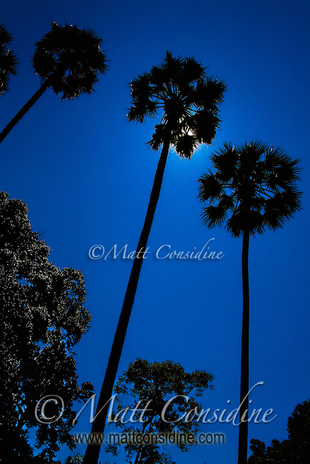 Palm trees silhouetted against the bright midday sun.<br /> (Photo by Matt Considine - Images of Asia Collection)