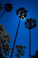 Palm trees silhouetted against the bright midday sun. (Photo by Matt Considine - Images of Asia Collection)