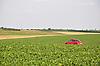 grünes Zuckerrübenfeld mit rotem Auto