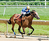 Sweet Soliloquy winning at Delaware Park on 6/29/13