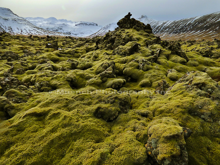 Iceland Moss,Snaefellsnes National Park,Iceland