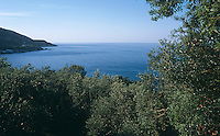 A view over the tops of olive trees which cover the slopes of Mount Pelion towards the Aegean sea