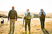 David Thompson, left, Pete Coppolillo, center, and Molly Stratton, all of Bozeman, Montana, head to the field to hunt upland game birds near the Missouri River Breaks.