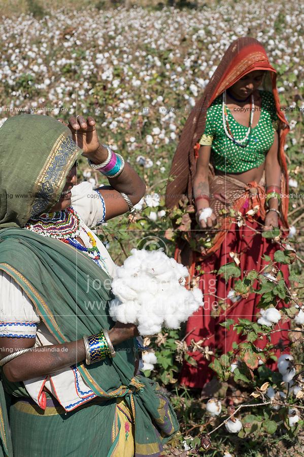 INDIA, Madhya Pradesh, Khargone , tribal farmer of cooperative Shiv Krishi Utthan Sanstha harvest fair trade organic cotton / INDIEN, Madhya Pradesh, Khargone, Adivasi farmer der Kooperative Shiv Krishi Utthan Sanstha ernten fairtrade Biobaumwolle