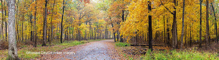 63895-15908 Road in fall color Stephen A. Forbes State Park Marion Co. IL