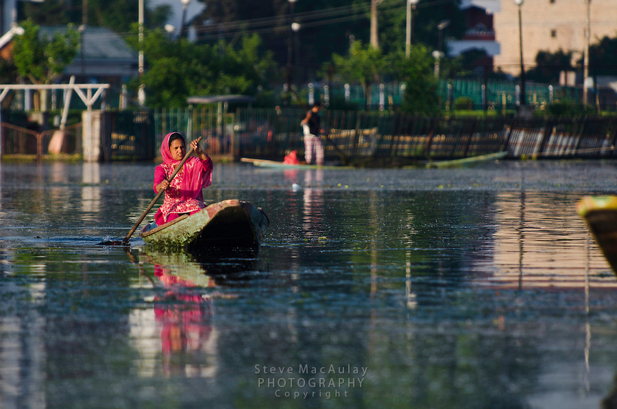Colorfully dressed Kashmiri woman paddling a traditional shikara on Dal Lake, Srinagar, Kashmir, India.