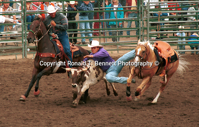 Bulldogging Steer wrestling in a rodeo event which a horse mounted rider chases a steer, drops from the horse to the steer then wrestles the steer to the ground by twisting its horns,  California, West Coast of US, Golden State, 31st State, California, Fine Art Photography by Ron Bennett, Fine Art, Fine Art photography, Art Photography, Copyright RonBennettPhotography.com ©