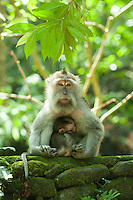 Mother and baby.<br />