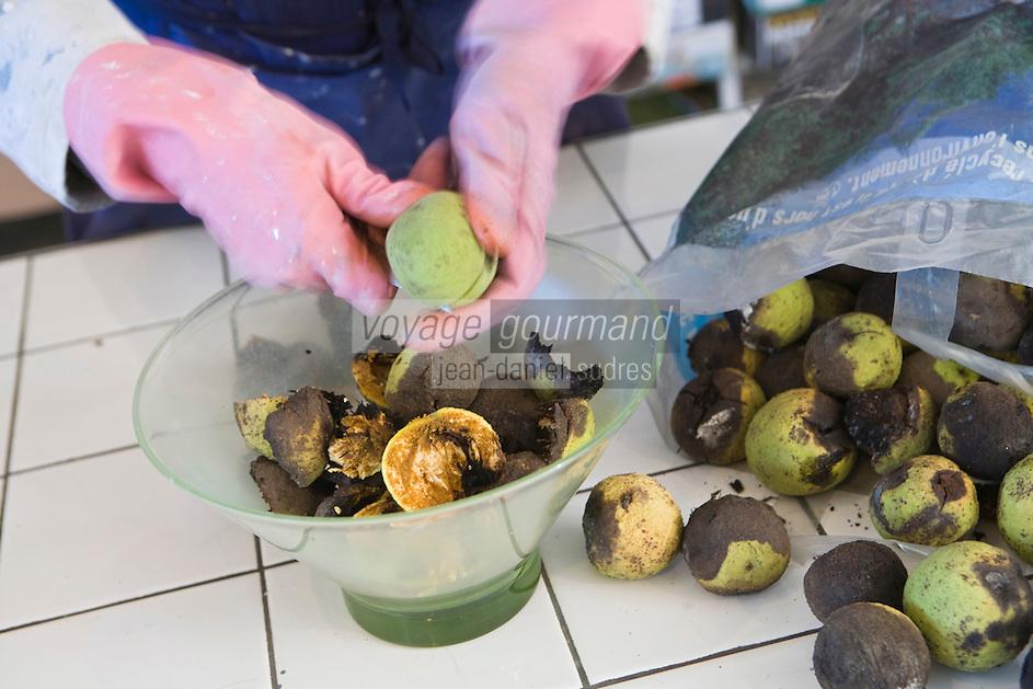 Europe/France/Midi-Pyrénées/81/Tarn/ Graulhet: Préparation du brou de noix qui servira à préparer de la laque de noyer qui colorera des crayons de pastel chez  L'Artisan Pastellier  dans son atelier du:Pays de Cocagne