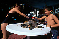 Children scrub and clean the shell of a Hawksbill Turtle, Eretmochelys imbricata, Eilat Underwater Observatory Marine Park, Eilat, Israel, Red Sea, MR