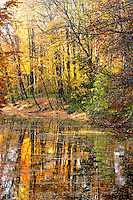 Splendid fall foliage reflecting in the lake at the Stadtwald in Krefeld Germany.