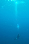"""Divers emerge above the reef at the end of our dive.  """"The Garden"""" dive site, Costa Maya, Mexico."""