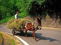 Italy, Lombardy, Lake Garda, farmer with donkey-drawn cart