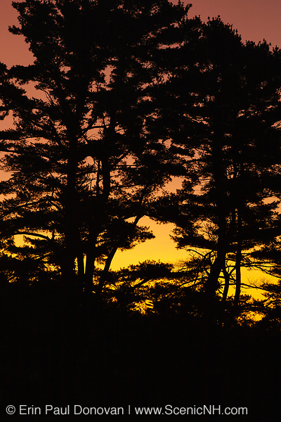 The silhouette of a pine forest during the night in New Hampshire USA. The orange glow in the background is light pollution from road traffic.