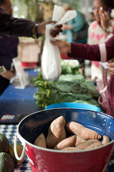 November 23, 2010. Chapel Hill, NC.. Customers buy sweet potatoes and other produce from Stanley Hughes, a farmer whose family has been in the business for generations, at the UNC Hospital Farmer's Market..   The sweet potato seems to be having a comeback, with many farmers increasing their planting of the potato's numerous varieties, as well as many restaurants including it on their menu in various forms such as the ever popular sweet potato fry.