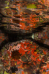 Indonesia, Lembeh, red-orange, Reflections of Rocks underwater, underwater marine life, yellow