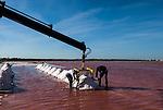 Camargue-Aigues Mortes.  Nella foto la raccolta del Fleur de sal: i cumuli di sale appena raccolto vengono portati via.