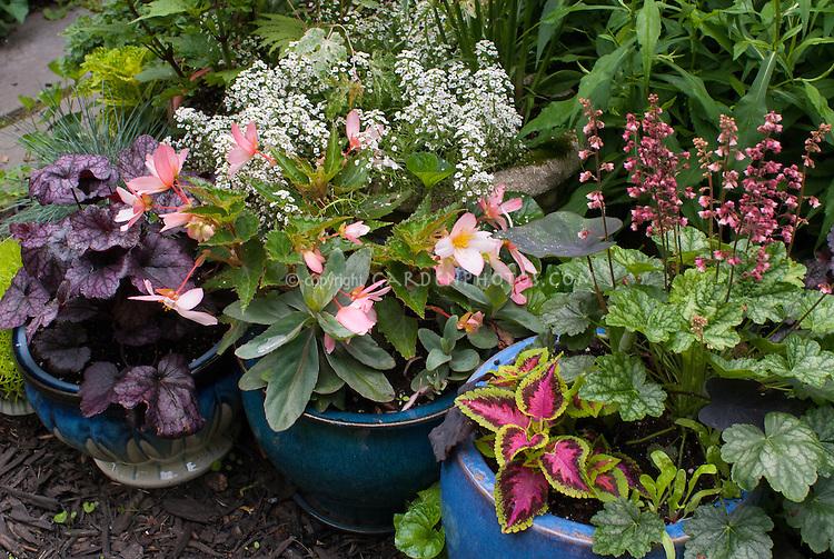 Container Gardens Pots, Sedum, Coleus, Alyssum Lobularia, Heuchera Berry  Timeless In Bloom