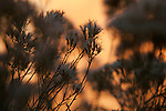 Morning light in Zion National Park in Southwestern Utah.