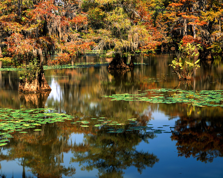 Cypress trees in fall color at Caddo Lake State Park, TX