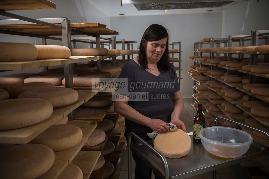 France, Nord (59),Côte d'Opale, Killem:  Affinage du Fromage de Bergues de la Ferme J-B Ronckier //  France, Nord, Opal Coast, Killem: Ripening cheese Bergues Farm JB Ronckier