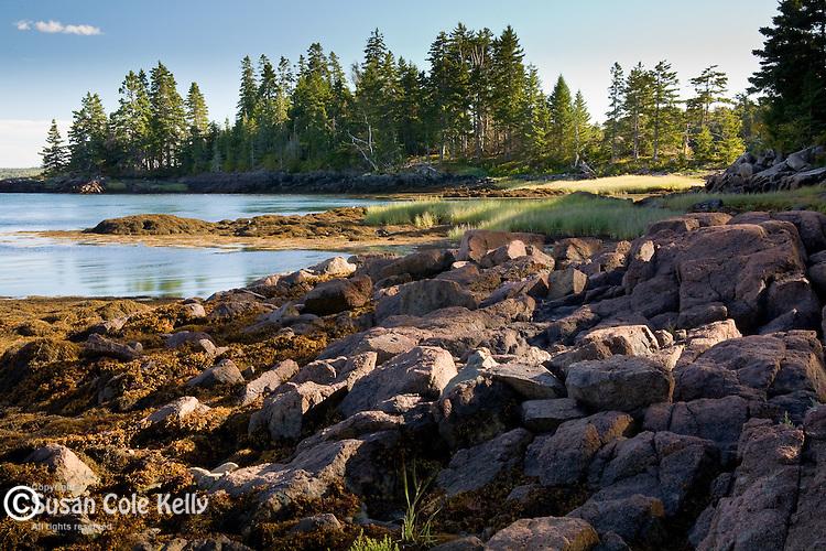 The rocky Maine coast at Cobscook Bay State Park, Downeast ME, USA