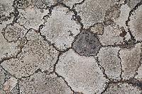 Verschiedene Arten von Krustenflechten, Krustenflechte auf Felsen in den Alpen, crustose lichens, crustose lichen