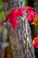 Fall in the Ozark National Forest Arkansas.