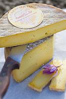 Europe/France/Midi-Pyrénées/46/Lot/Carayac:La  Carayaquoise ,Tomme de Brebis  au Safran , fromage de brebis fermier -  Ferme de M Pradines  //  France, Lot, Carayac, Monsieur Pradines's farm, La Carayaquoise, Tomme Cheese made with saffron and ewe milk