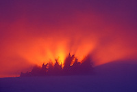 Alpine trees silhouetted against fiery sunset in fog, Table Mountain, North Cascade Mountains, Mount Baker National Recreation Area, Washington