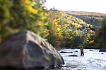Woman fly fishing under autumn colors on the Black River, Vermont. 2010