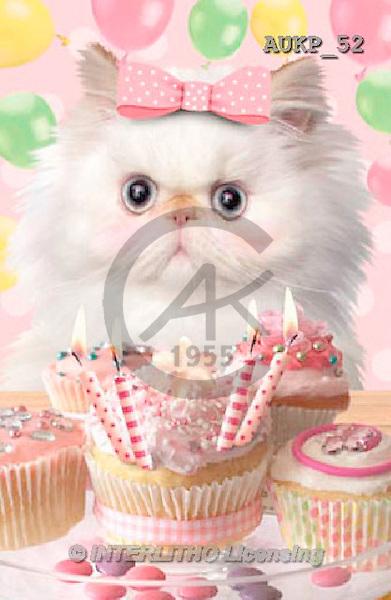Samantha, ANIMALS, REALISTISCHE TIERE, ANIMALES REALISTICOS, funny, photos+++++Party Pink Kitten master,AUKP52,#a#