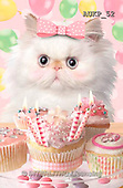 Samantha, ANIMALS, REALISTISCHE TIERE, ANIMALES REALISTICOS, funny, photos+++++Party Pink Kitten master,AUKP52,#a#