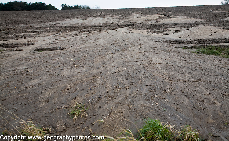 Soil erosion in a field from overland flow after heavy rain, Rendlesham, Suffolk, England
