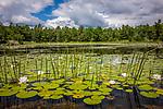 Beaver Pond near Eagle Lake, Acadia National Park, ME