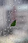 Leaf on a window pane during the downpour of a typhoon.