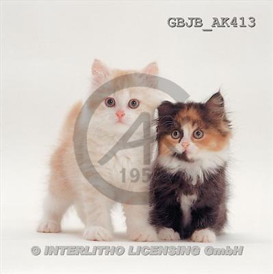 Kim, ANIMALS, fondless, photos(GBJBAK413,#A#) Tiere ohne Fond, animales sind fondo
