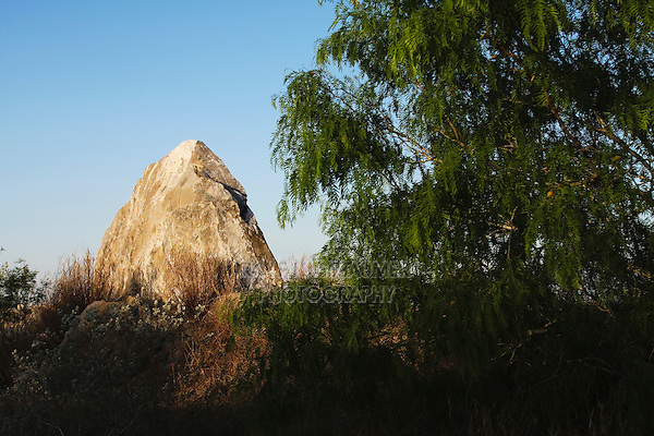 Rockformation and Honey Mesquite tree (Prosopis glandulosa), Rio Grande Valley,Texas, USA