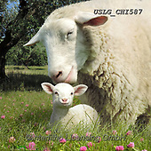 CHIARA,REALISTIC ANIMALS, REALISTISCHE TIERE, ANIMALES REALISTICOS, paintings+++++,USLGCHI587,#A#, EVERYDAY ,photos
