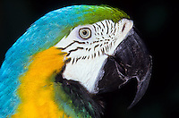 macro shot of parrot head foto, reise, photograph, image, images, photo,<br />