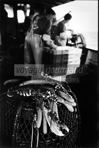 Europe/France/Bretagne/29/Finistère/Saint-Guénolé : Pêche au homard à bord du Galathée