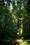 Ireland - County Clare <br /> Lough Derg - Woodland