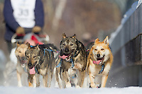 Michael Suprenant dogs on the trail during the ceremonial start of the Iditarod sled dog race Anchorage Saturday, March 2, 2013. ..Photo (C) Jeff Schultz/IditarodPhotos.com  Do not reproduce without permission