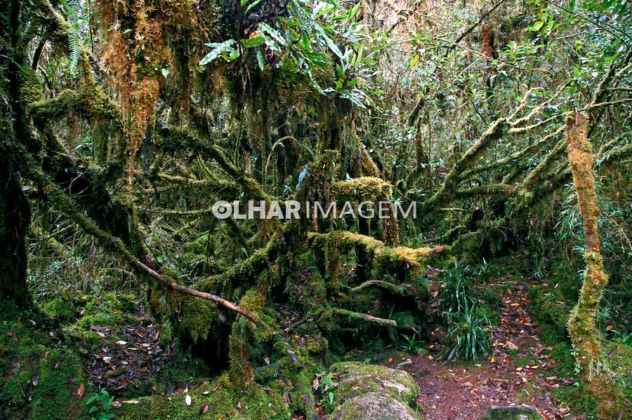 Vegetação da Trilha Inca. Peru. 2006. Foto de Flávio Bacellar.