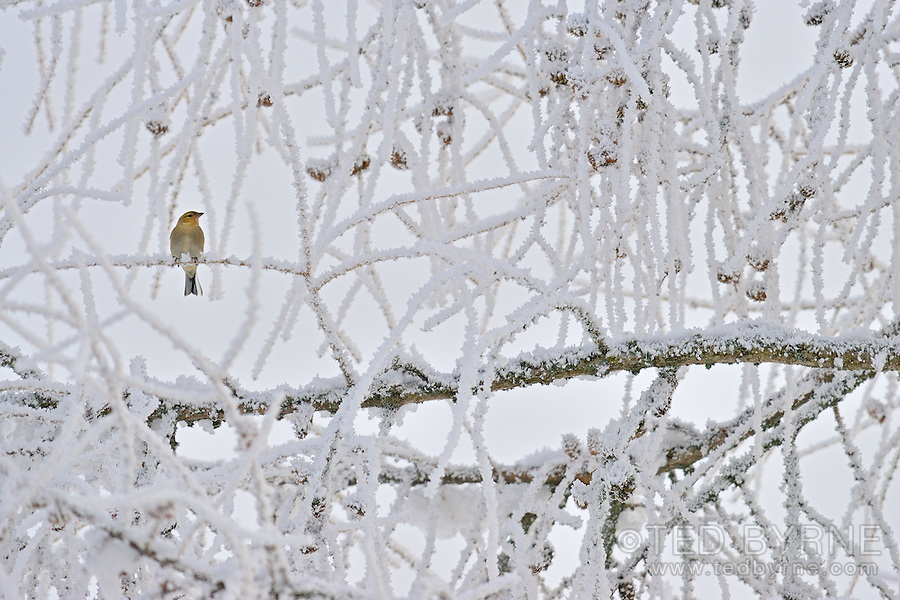 Lone bird perched in a snow covered tree