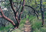 FB-S30,  4x6 postcard,  Henry W. Coe State Park,  big-berry manzanita