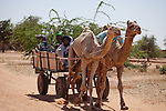 A Fulani man and woman ride a camel cart through the village market of Bourro in northern Burkina Faso.
