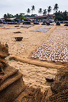 Photo of Negombo fish market, fish drying at Lellama fish market, Negombo, West Coast of Sri Lanka, Asia. This is a photo of fish drying in the sun at Negombo fish market (Lellama fish market), Negombo, West Coast of Sri Lanka, Asia.