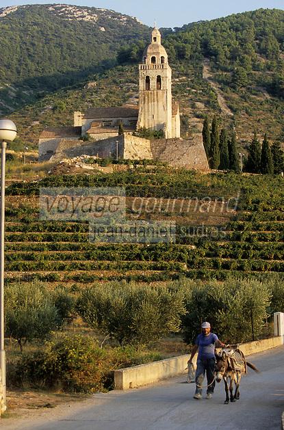 Europe/Croatie/Dalmatie/ Ile de Vis/ Komiza: Eglise Saint-Nicolas dans le vignoble et vigneron rentrant des vendanges avec son mulet