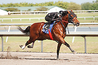 #67 fast work of day 10:0Fasig-Tipton Florida Sale,Under Tack Show. Palm Meadows Florida 03-23-2012 Arron Haggart/Eclipse Sportswire.